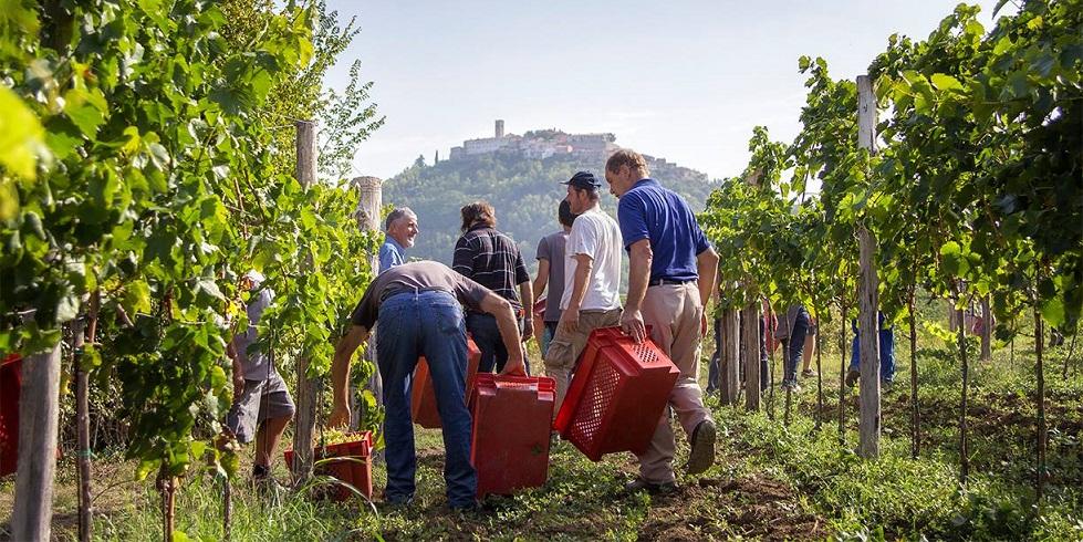 Fakin Good Wines in Istrien, Kroatien