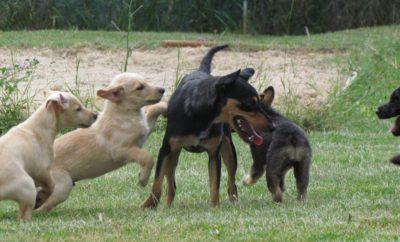 Tierhilfe Istrien: Spendenaufruf Welpenfutter